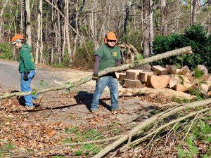 tree care worker Burton street nc